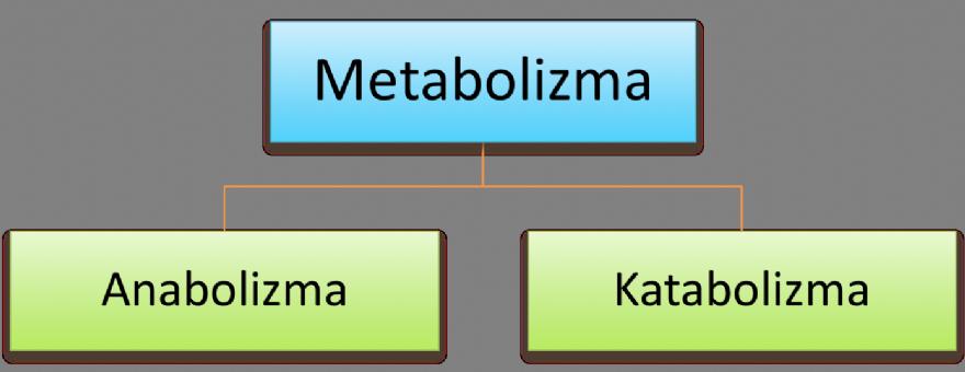 Anabolik katabolik ne demek steroids effects on the body